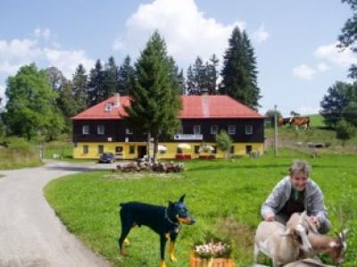 NOVÁ PEC - U ŠUMAVSKÉHO LIŠÁKA - ubytování Šumava - ubytování v penzionu na Šumavě - fotografie č. 1