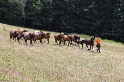 Chalupa Lužná - huculské koně - ubytování Beskydy - chalupa k pronajmutí v Beskydech - fotografie č. 5