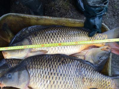 Chata s rybolovem - ubytování Jižní Čechy - chata k pronajmutí  v Jižní Čechách - fotografie č. 4